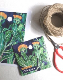 Gabby Malpas Art card and organic seed packet calendula