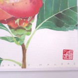 Camelia watercolour paper print by Gabby Malpas closeup of chop