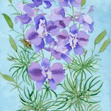 Seed packet design by Gabby Malpas for Sarahs seeds larkspur