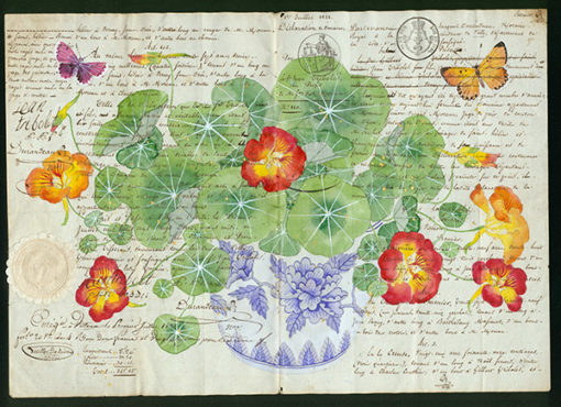 Legalese. Image of nasturtiums Archival print limited edition of 10