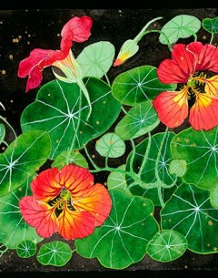 Nasturtiums image watercolour gouache and pencil on paper by Gabby Malpas