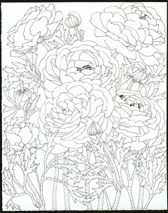 ranunculus pen on Arches paper. Black and white drawing