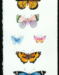 butterflies original painting by Gabby malpas. Watercolour and pencil on Arches paper