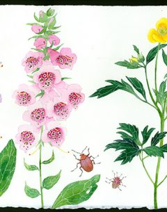 meadow flowers original watercolour on Arches paper by Gabby Malpas foxgloves and buttercups