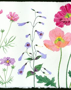 meadow flowers original watercolour poppies cosmos and penstemon watercolour on Arches paper by Gabby Malpas