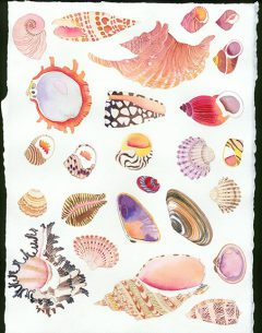 tropical seashells original watercolour on Arches paper by Gabby Malpas