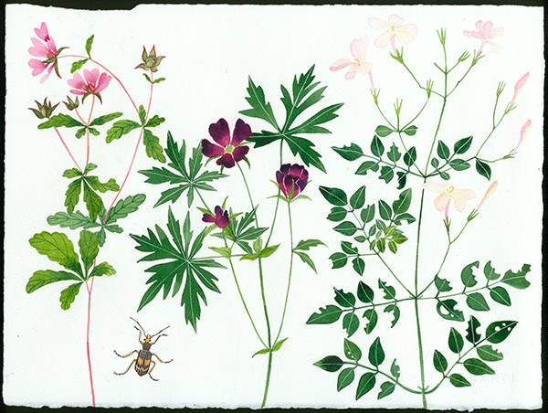 Gabby Malpas original watercolour painting: 'meadow flowers 3'