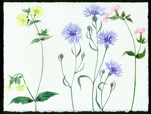 Gabby Malpas original watercolour painting: 'meadow flowers 5'