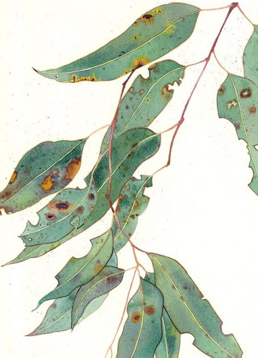 Limited edition print on archival paper: eucalypt 1