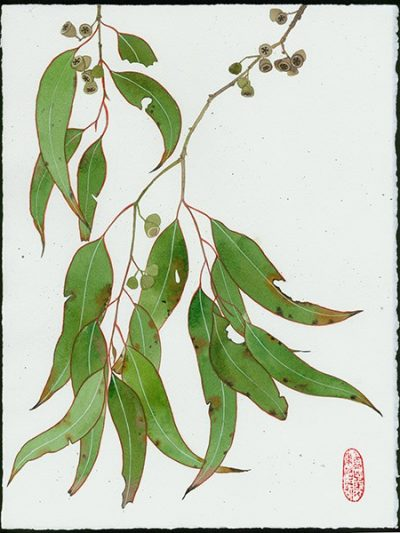 Gabby Malpas original watercolour painting: 'Eucalypt 6'