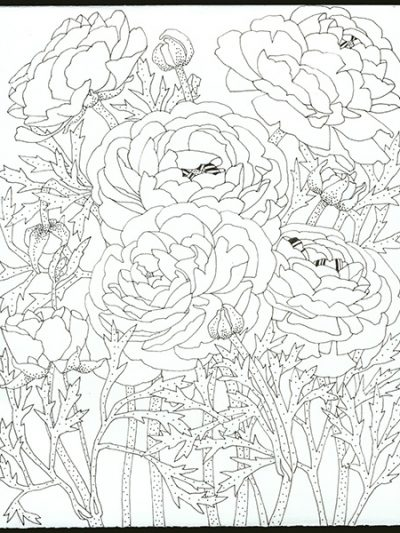 Gabby Malpas original black and white drawing: 'Ranunculus'