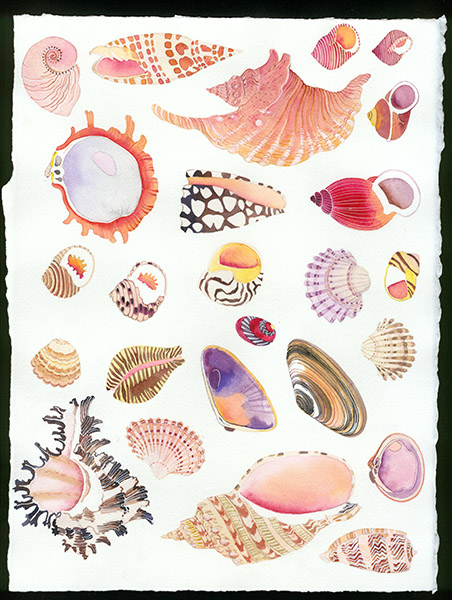 Gabby Malpas original watercolour painting: 'Seashells'