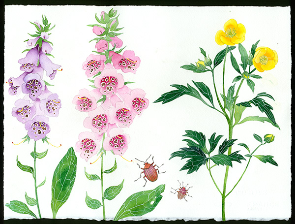 Gabby Malpas original watercolour painting: 'meadow flowers 4'