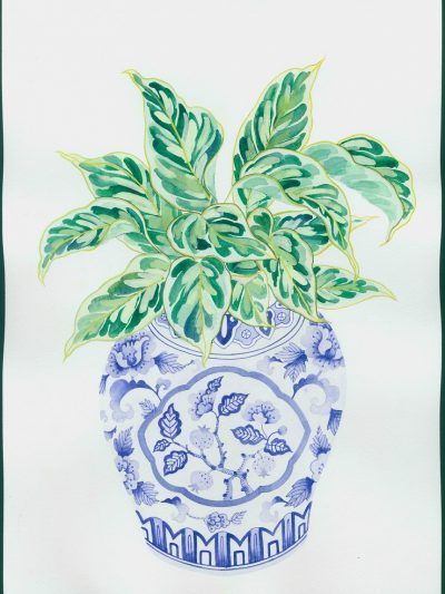 Gabby Malpas original watercolour painting: 'Calathea and blue and white vase'