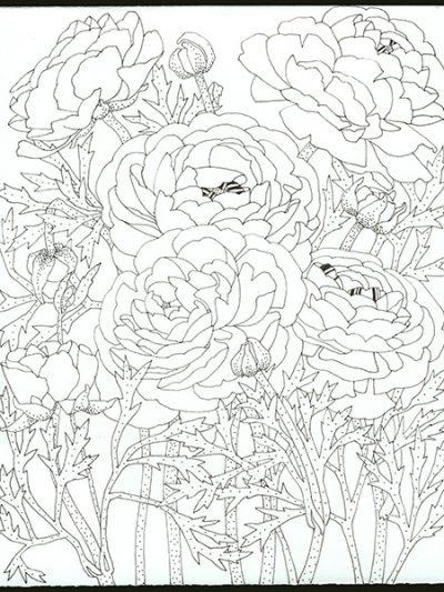 Gabby Malpas original black and white drawing: 'Ranunculus'