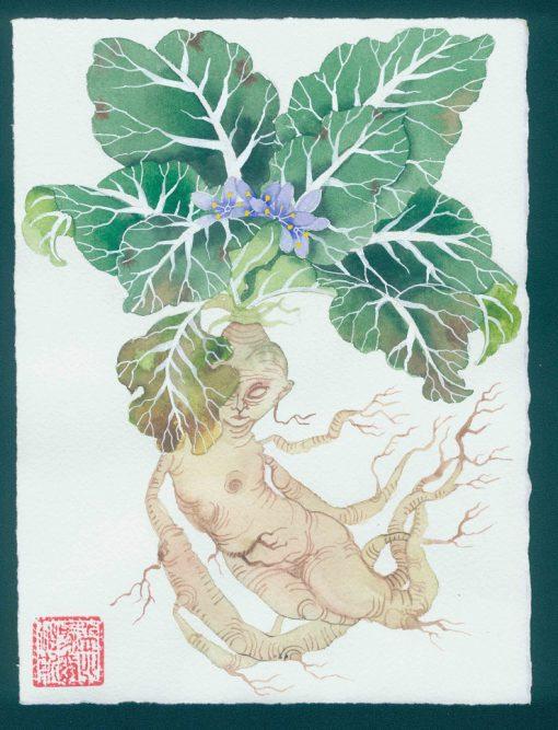 Mandrake 3. Original watercolor painting by Gabby Malpas