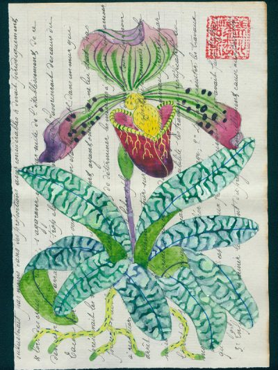 slipper orchid. watercolour and gouache on fragment of antique legal documentation. Framed